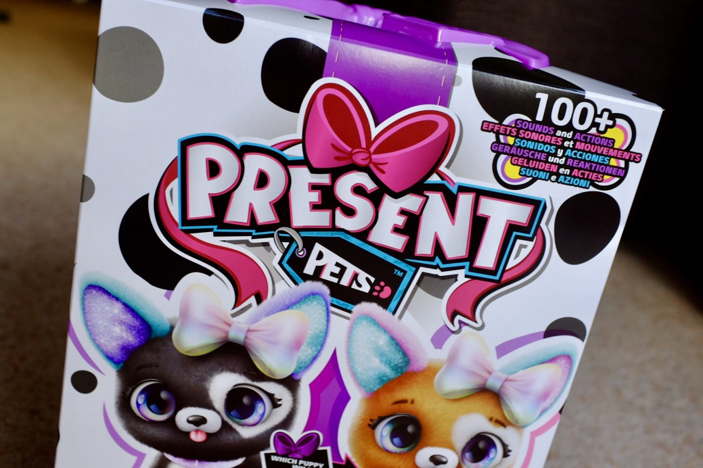 present pets in the box
