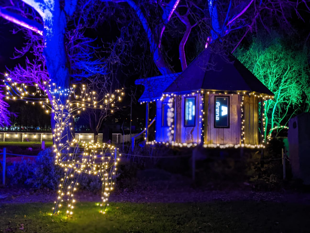 lit up reindeer and house