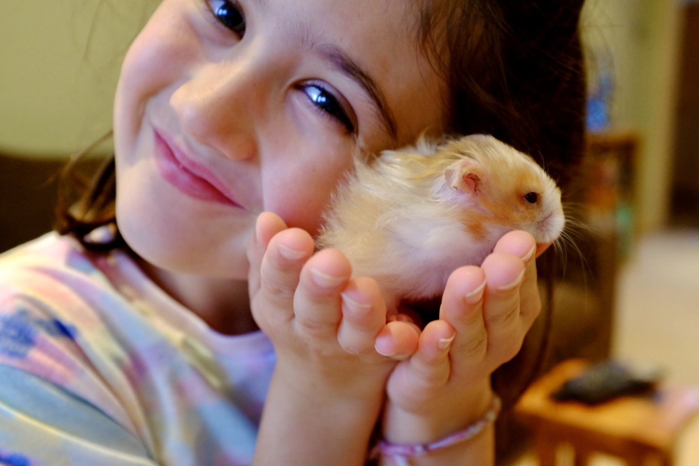 Buying a Hamster – 12 Things We Have Learnt